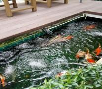 รูปบ่อปลาคาร์พ สวยๆ ในประเทศไทย